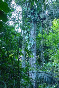 Amazon Basin Rainforest - Yuturi Biological Reserve